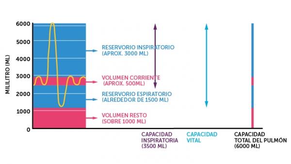 9_respiratoriske_volum_spansk